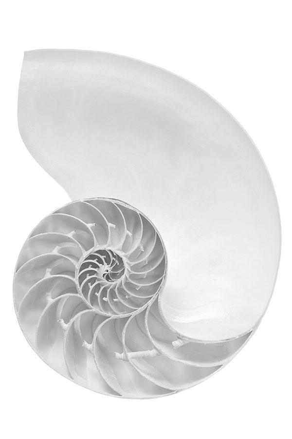 nautilus-shell-fibonacci